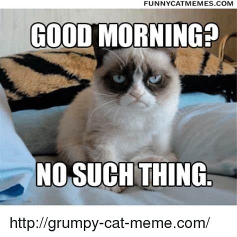Grumpy Cat Good Morning Meme - pin grumpy cat good and no memes pandawhale on pinterest