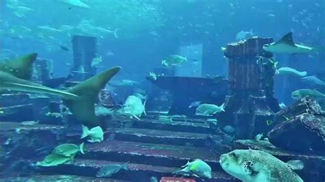 atlantis the palm dubai aquarium hd relax and chillout by looking