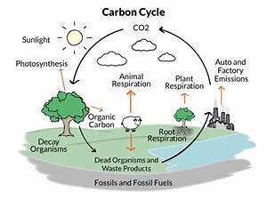 Hs-ess2-6 Carbon Cycle