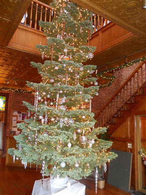 silvertip silvertip fir christmas trees pinterest