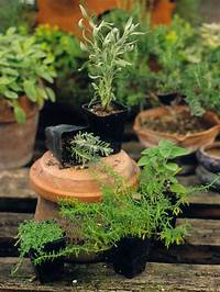 potted herb garden Planting Potted Herbs