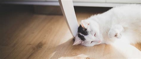 allergien bei katzen veteri