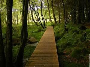 Foret Pour Bois : photo passerelle dans les bois p foot bridge pinterest ~ Edinachiropracticcenter.com Idées de Décoration