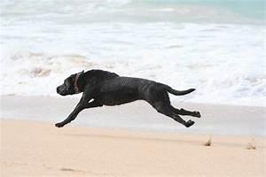 Of Dog Running