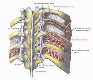 Лечение остеохондроза шейного су джок