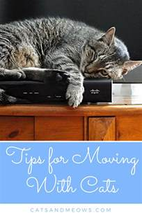 moving with cats tips for moving with cats cats and meows