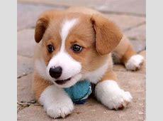 Cute Puppies 110 pics