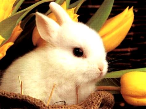 Rabbit HD Wallpapers – Movie HD Wallpapers