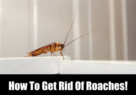 how to get rid of cockroaches in kitchen cabinets how to get rid of roaches in the bathroom 28 images 10