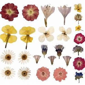 Blumen Trocknen Ohne Farbverlust : diy mit blumen blumen trocknen blog floraqueen deutschland ~ A.2002-acura-tl-radio.info Haus und Dekorationen