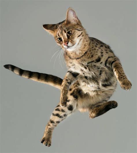 katzen transportbox für 2 katzen flying cats so segeln diese katzen durch die luft