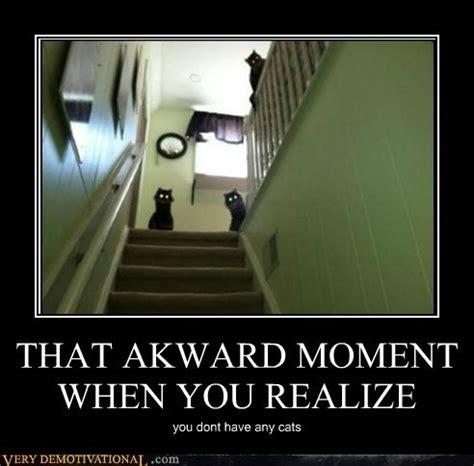 Awkward Cat Meme - pin by carly krehn on humor pinterest