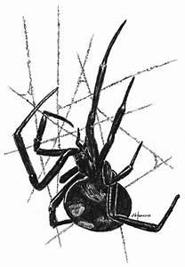 Black Widow Spider by saba-do on DeviantArt