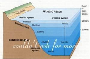 Teaching Kids Ocean Science  Ocean Floor And Ocean Zones