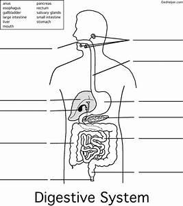 Label Digestive System
