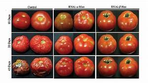 The Health Effects Of Gmo Foods