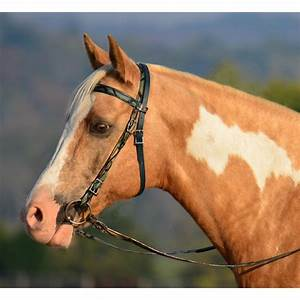 Western Horse Bridles | www.imgkid.com - The Image Kid Has It!