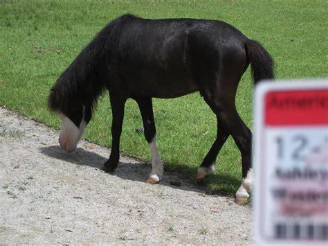heterotroph horse biology organism meaning