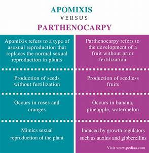 Difference Between Apomixis And Parthenocarpy  U2013 Pediaa Com