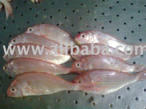 india sea fish species indiatimescom