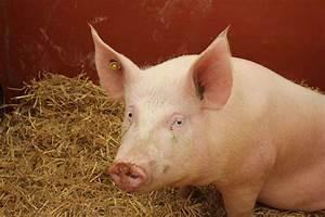 It U2019s National Donate Life Month  U2013 Thanks To Animal