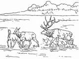 Elk Coloring Lake Lac Nature Bull Printable Sketch Mountain Coloriage Drawing Coloriages Dessin Shallow Rocky Colorier Template sketch template