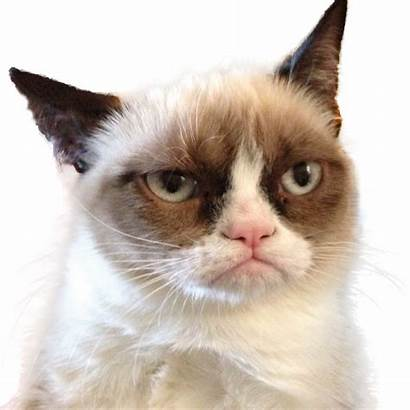 Cat Grumpy Angry Transparent Background Cats Memes