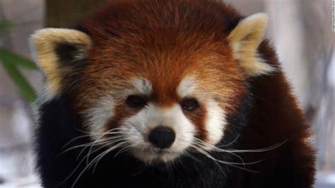 How zoo animals survive a blizzard - CNN Video