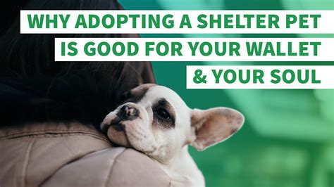 Why Adopting A Shelter Pet Is Good For Your Wallet And Your Soul Gobankingrates