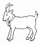 Goat Coloring Pages Symbol Goats Sheep sketch template