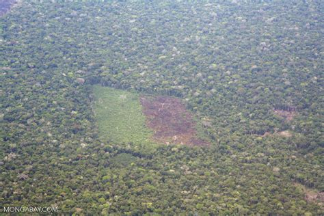 aerial view  deforestation   amazon