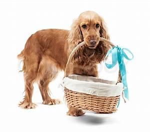 Einen Korb Bekommen Englisch : red hund h lt einen korb stockfoto colourbox ~ Orissabook.com Haus und Dekorationen