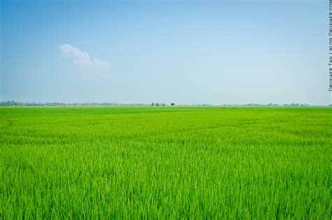 Just a paddy field by Cruxiaer on DeviantArt