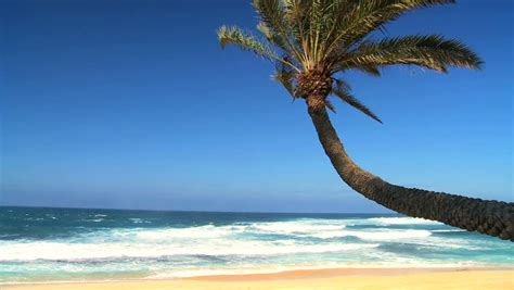 curved palm tree in close up with intense blue sky