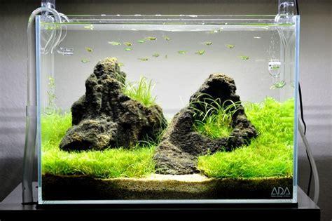 Aquascaping Stones - unzan cherry shrimp
