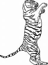Coloring Pages Foot Footprint Track Animal Getcolorings Printable Anatomy sketch template