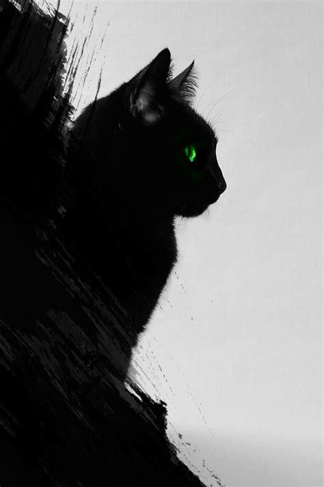 Aesthetic Cat Wallpaper Iphone by Black Cat Iphone Wallpaper Hd
