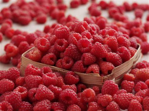 Dr Oz Review of Raspberry Ketone   Healthy Diet Advisor