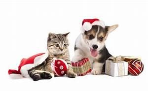 Fundraising Ideas For Christmas Fairs
