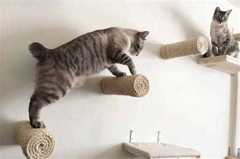 floating cat shelves floating cat shelf so that s cool