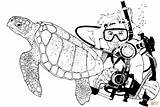 Scuba Diver Coloring Turtle Sea Printable Turtles Pages Drawing Navy Seal Sketch Diving Hawaiian Template Clipart Supercoloring sketch template