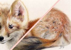 Fox Drawing MaryJaneFineArt Colored Pencil Drawings