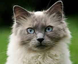 cat symptoms cat eye infection recognize the signs canna pet