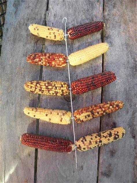 vintage wire ear corn dryer hanging rack  mini popcorn indian corn