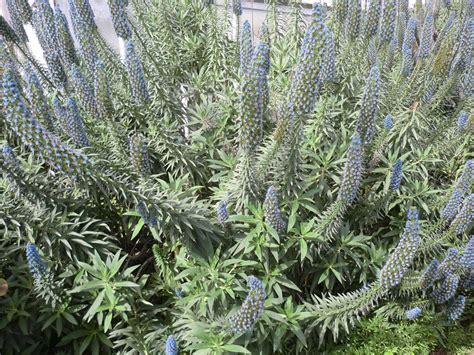 piante da vaso resistenti al freddo alberi da giardino sempreverdi da ombra missionmeltdown