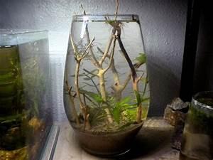 Vase Haut Pas Cher : vase aquarium pas cher ~ Teatrodelosmanantiales.com Idées de Décoration