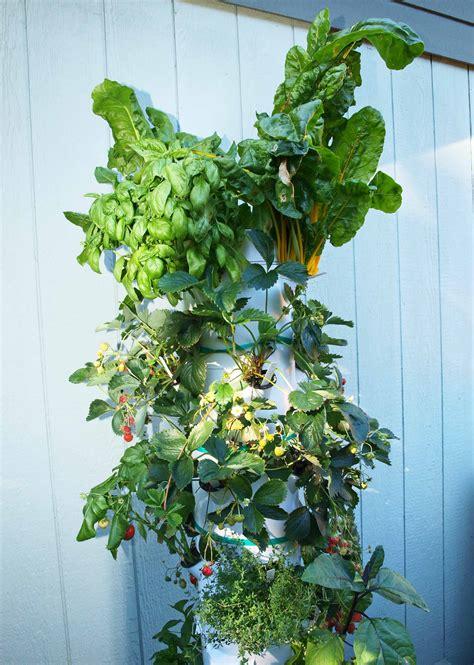 Vertical Gardening Strawberries by Aeroponics Backyard Tower Garden