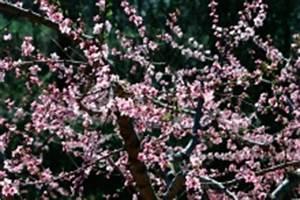 Wucherungen An Pflanzen : apfelbaum garten ~ Buech-reservation.com Haus und Dekorationen