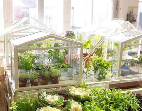 ikea socker indoor miniature greenhouse the green