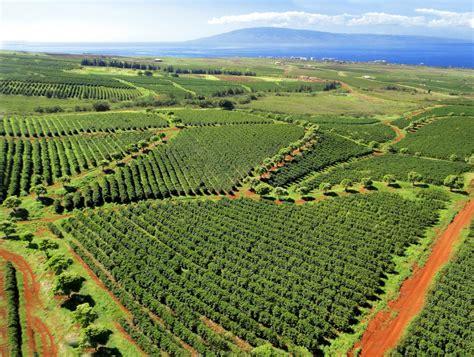 Taking Root: 200 Years of Coffee in Hawai?i   edible Hawaiian Islands Magazine
